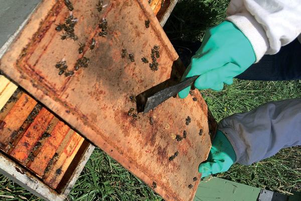 """Le groupe GMI, reconnu pour son implication historique dans le Développement Durable, offre une réponse structurelle, organisationnelle et d'innovation produit en faveur de l'environnement, de l'écoconception et des constructions passives... jusqu'à l'installation en 2015 de 5 ruches produisant du miel """"maison"""". Une dynamique de progrès... naturel pour l'entreprise ©GMI"""